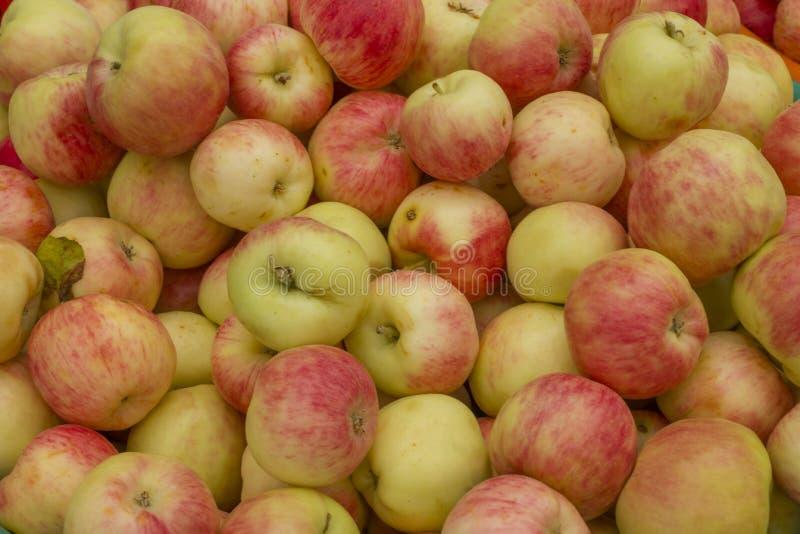 Veel rijpe verse rode groene appelen royalty-vrije stock foto