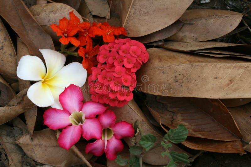 Veel soort bloemen royalty-vrije stock fotografie