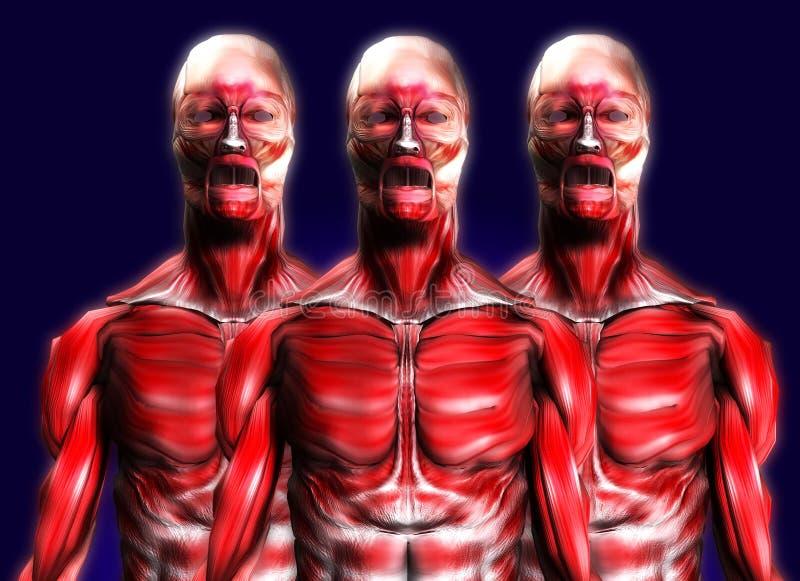Veel Spieren 2 stock illustratie