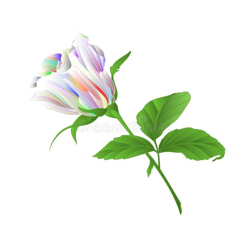 Veelkleurig Rosebud nam takje met bladeren op een witte uitstekende vector editable illustratie als achtergrond toe stock illustratie