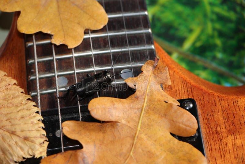 Veenmol en gitaar stock foto's