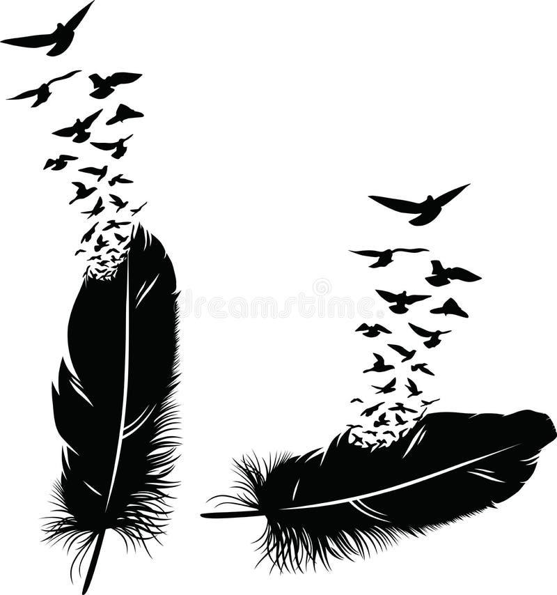Veer van een vogel stock foto's