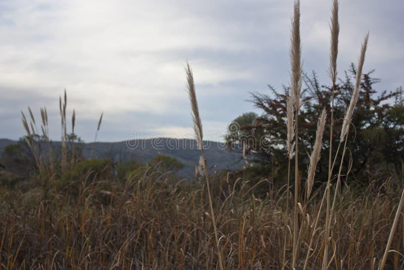 Veerstofdoeken in de berg stock foto's
