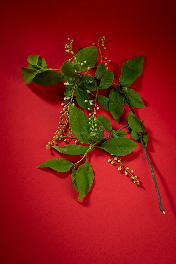 Veertak met bloemen op rode achtergrond royalty-vrije stock fotografie