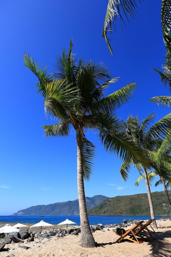 Veets, palmas de coco, céu azul, mar, céu azul, resto fotografia de stock royalty free