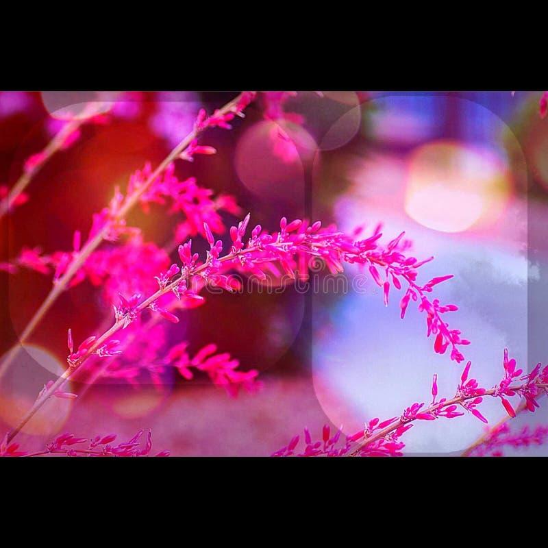 Vegas-Blume stockbild