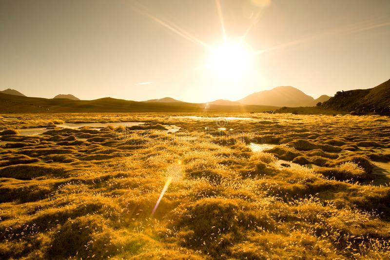 Vegas DE Quepiaco zoute meer en lagune in Altiplano in Chili stock foto's