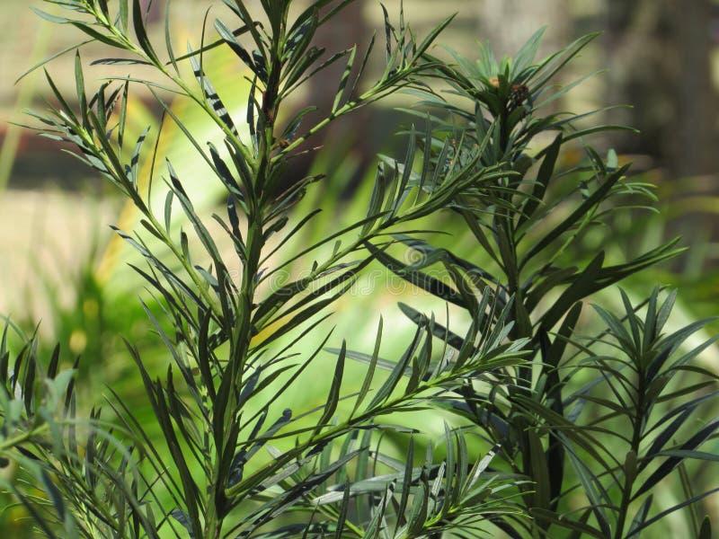 vegetação foto de stock
