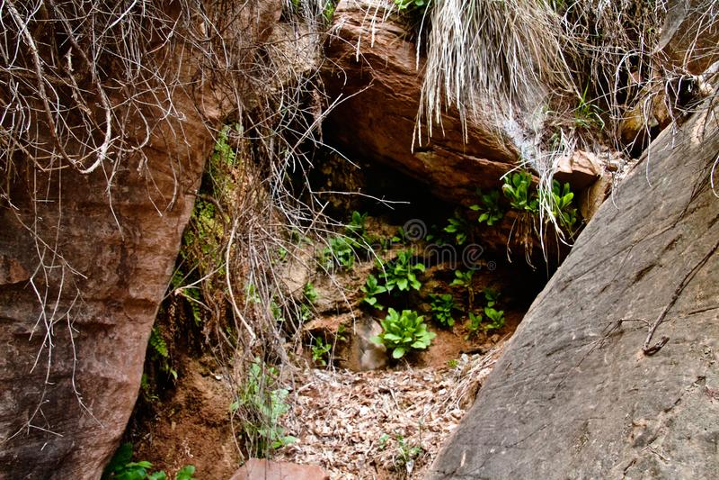 Vegetação da mola em Zion imagens de stock royalty free