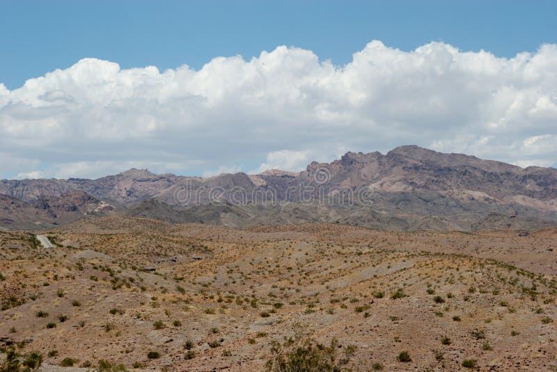 Vegetação do deserto imagem de stock