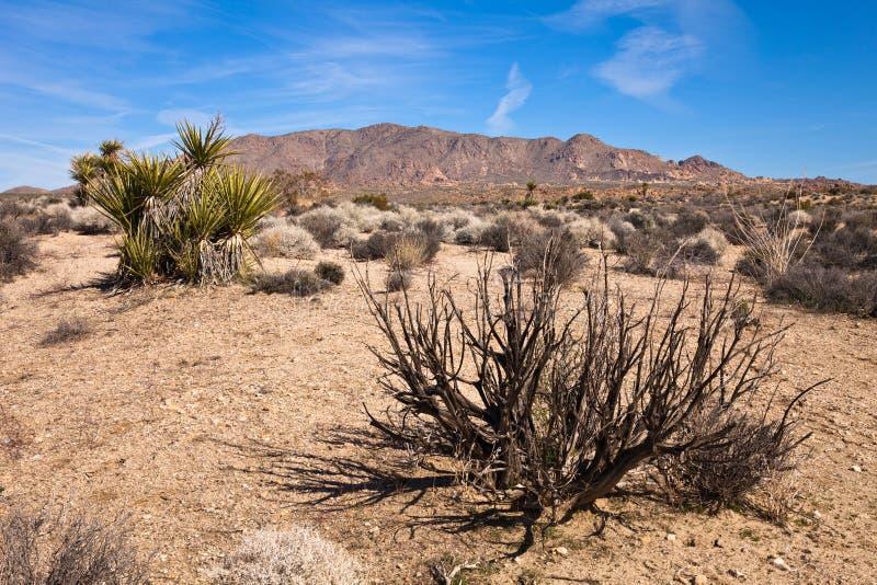 Vegetação do deserto fotografia de stock royalty free
