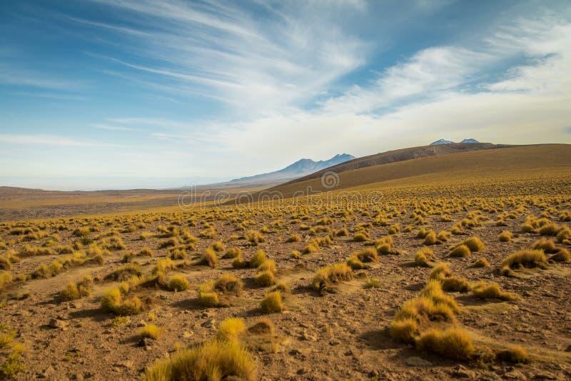 Vegetação do deserto de Atacama e montanhas - o Chile imagens de stock