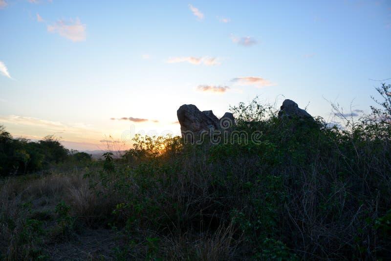 Vegetação do semi-árido do nordeste brasileiro iluminado com as cores mornas do por do sol fotos de stock royalty free