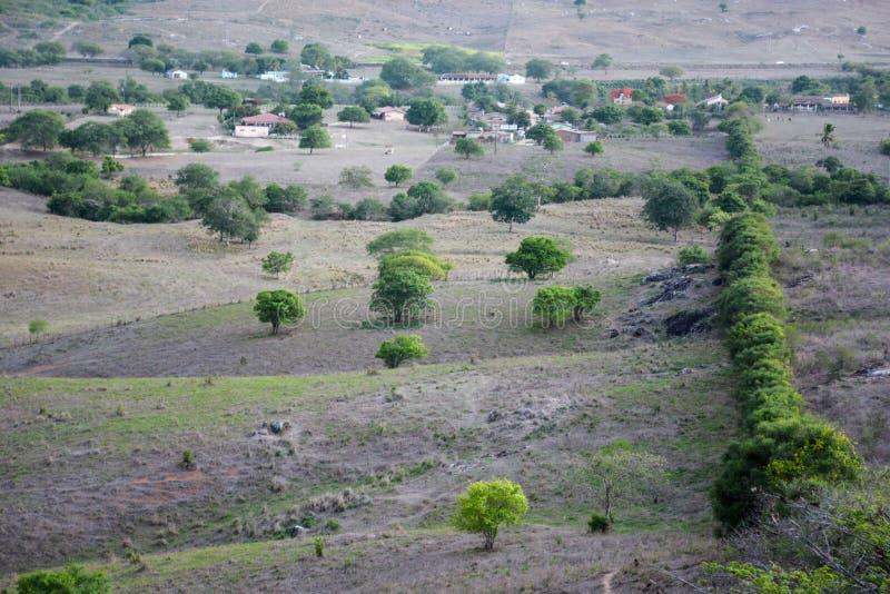 Vegetação do semi-árido do nordeste brasileiro iluminado com as cores mornas do por do sol imagem de stock royalty free