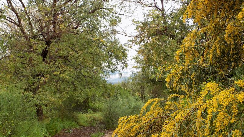 Vegetação em Retamar - LA TORRE-Andaluzia-Espanha-Europa de ALHAURIN DE foto de stock royalty free