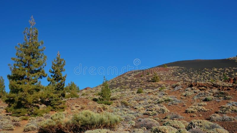 Vegetação endêmico no parque nacional de Teide, a paisagem incomum de Montana Samara, parque nacional de Teide foto de stock royalty free