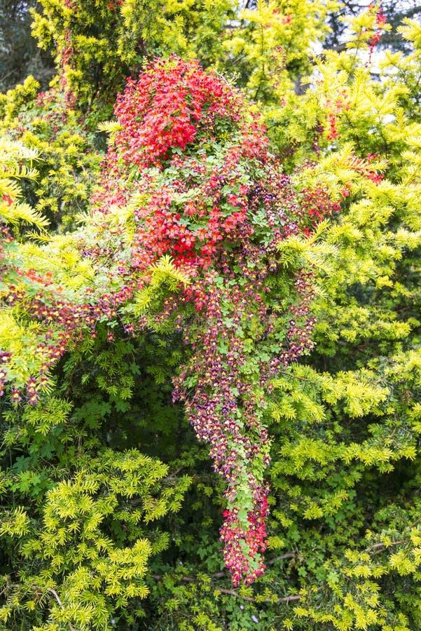 Vegetação floral notável e bonita em um parque fotos de stock