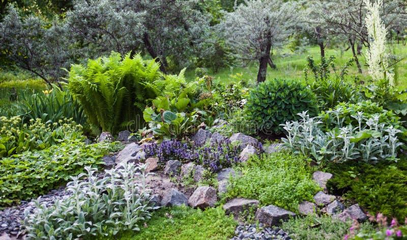 Vegetação luxúria no jardim de rocha verde foto de stock royalty free