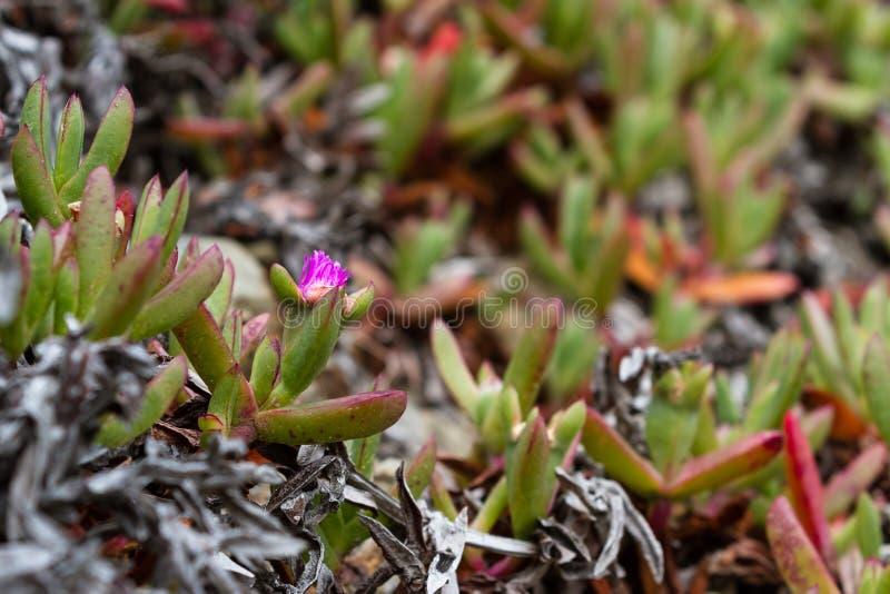 Vegetação rasteira suculento fotografia de stock royalty free