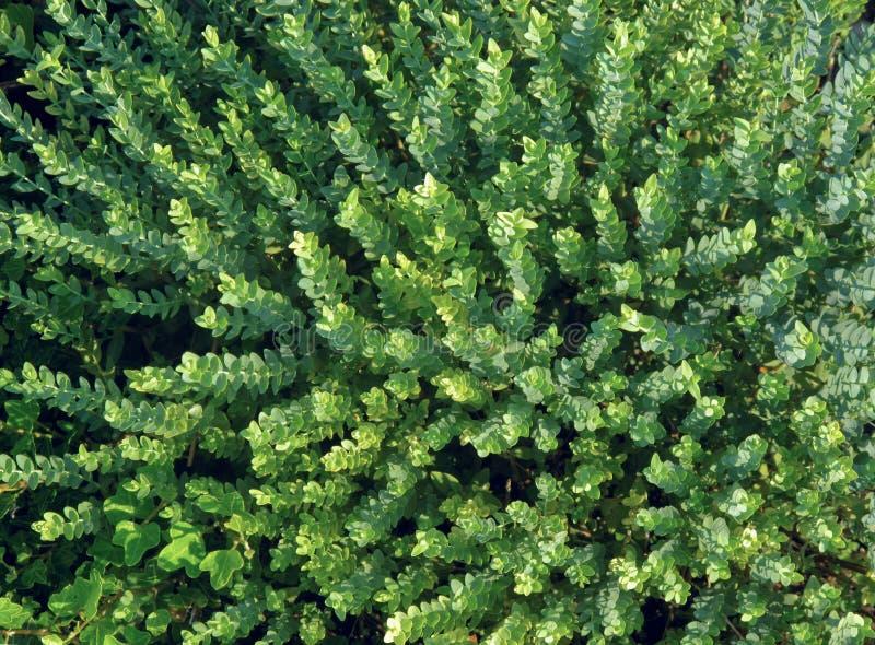Download Vegetação verde imagem de stock. Imagem de planta, horizontal - 16861915