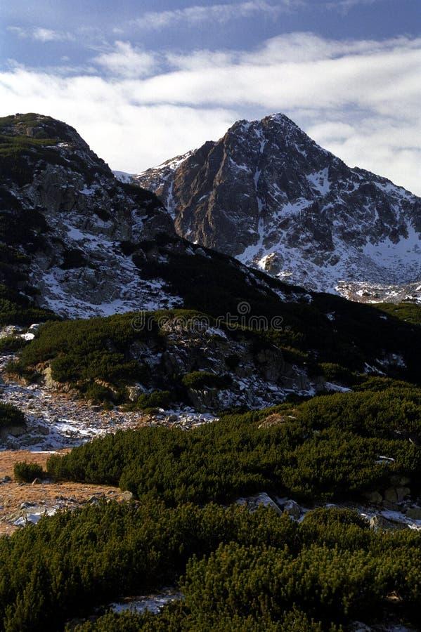 Vegetação verde na área alpina imagens de stock royalty free