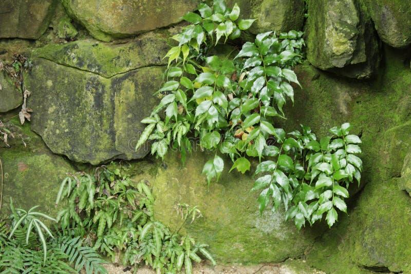 Vegetação verde na parede com musgo fotos de stock