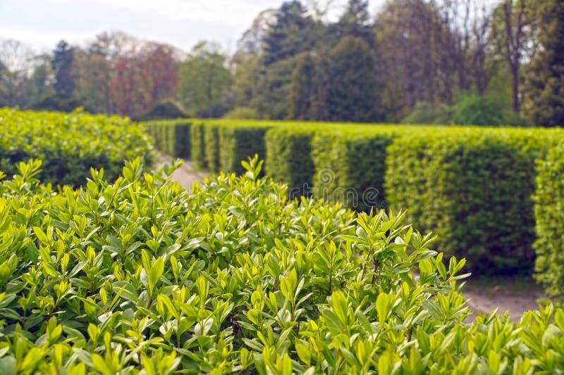 Vegeta??o da lux?ria da mola Um jardim clássico com fileiras das conversão fotografia de stock royalty free