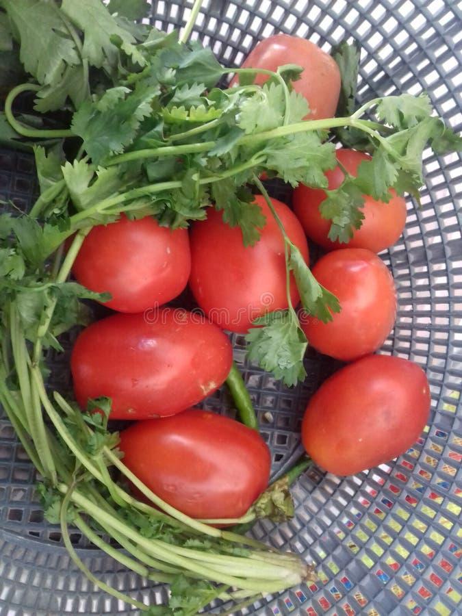 Vegetable корзина стоковое фото