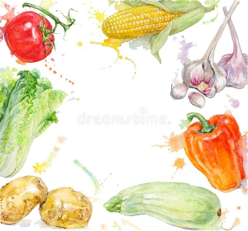 Vegetable покрашенная рукой рамка акварели с брызгает на белой предпосылке бесплатная иллюстрация