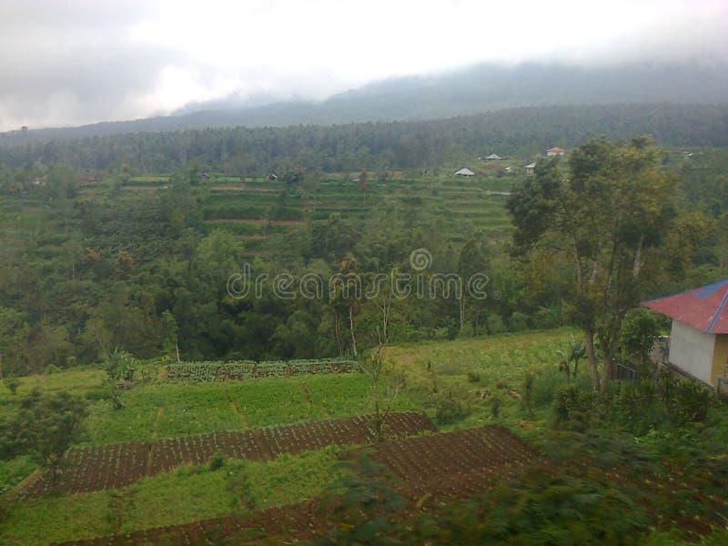 Vegetable поле стоковое фото rf
