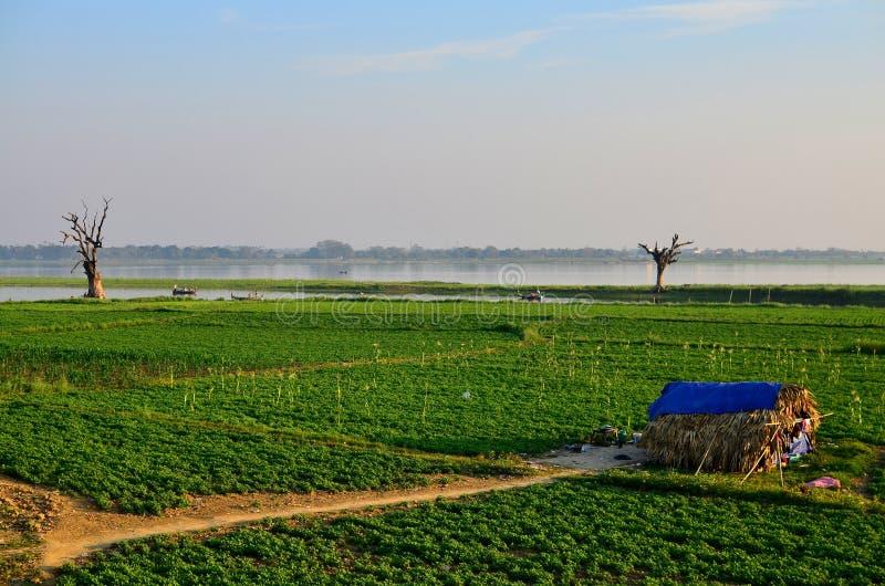 Vegetable поле около моста U-Bein стоковые изображения rf