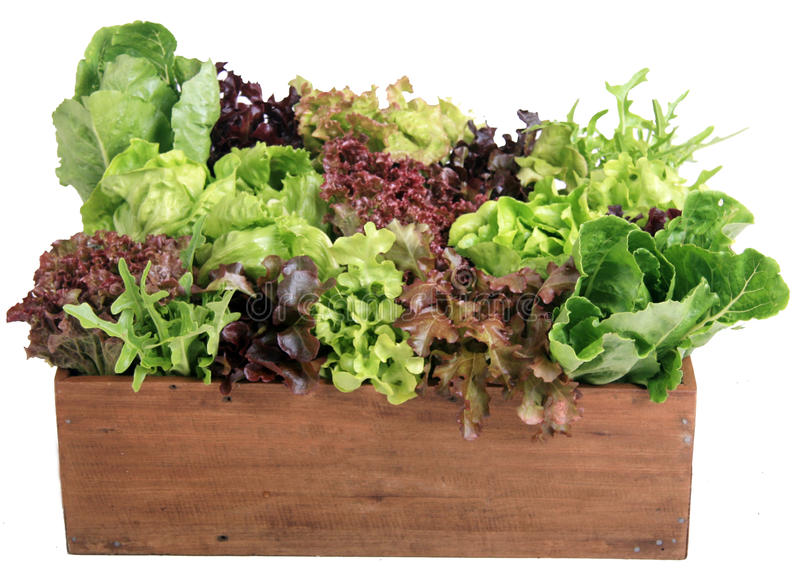 Download Vegetable 02 Royalty Free Stock Photos - Image: 16323008