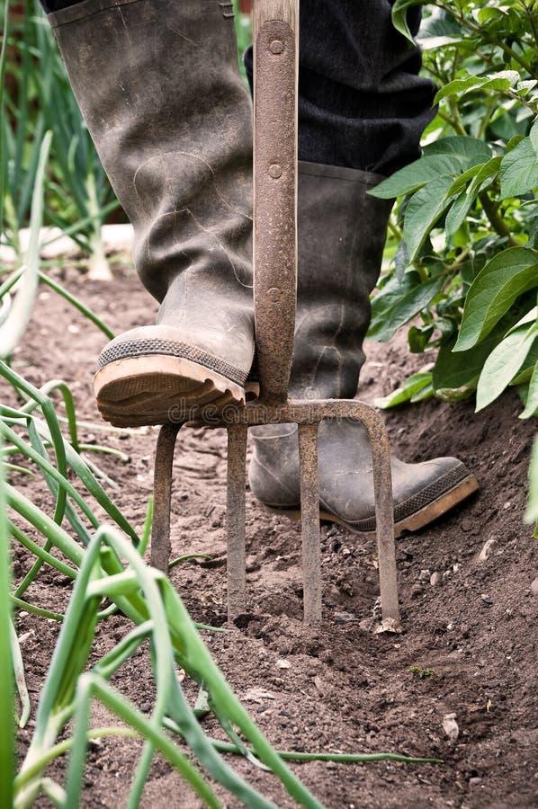 Vegetable Allotment Gardening royalty free stock image