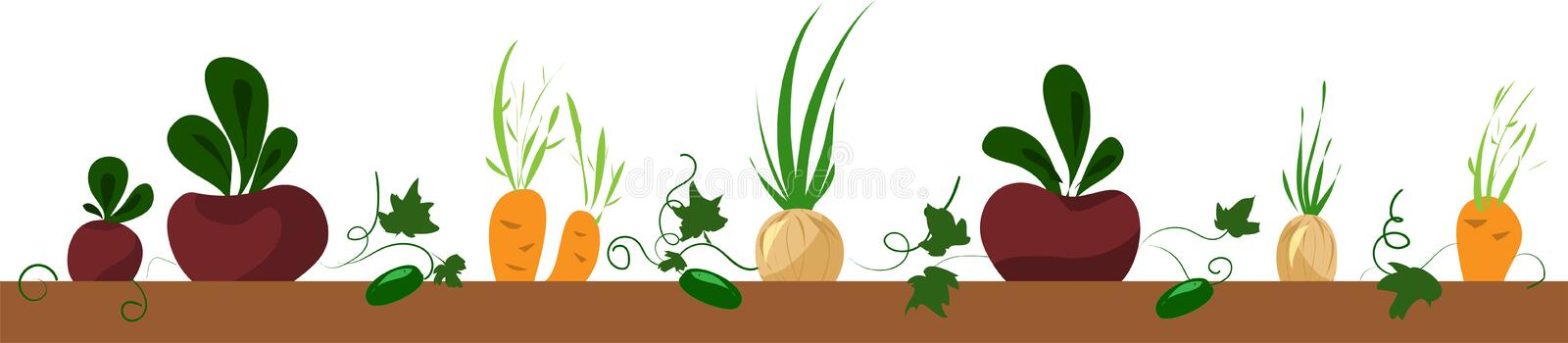 Vegetable bed, frame with beet, carrot, onion vector illustration