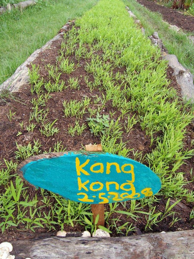 Vegetable beds, organic farm royalty free stock photo