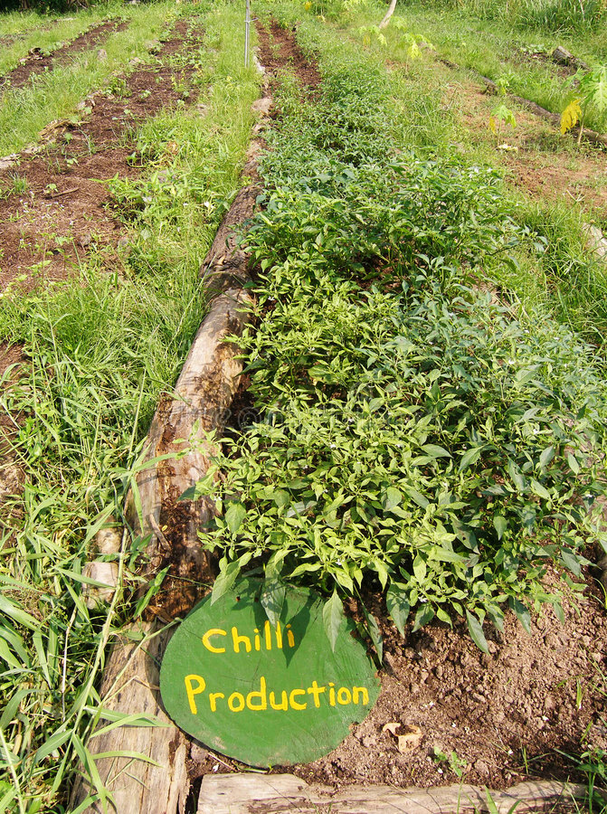 Vegetable beds, organic farm product stock image