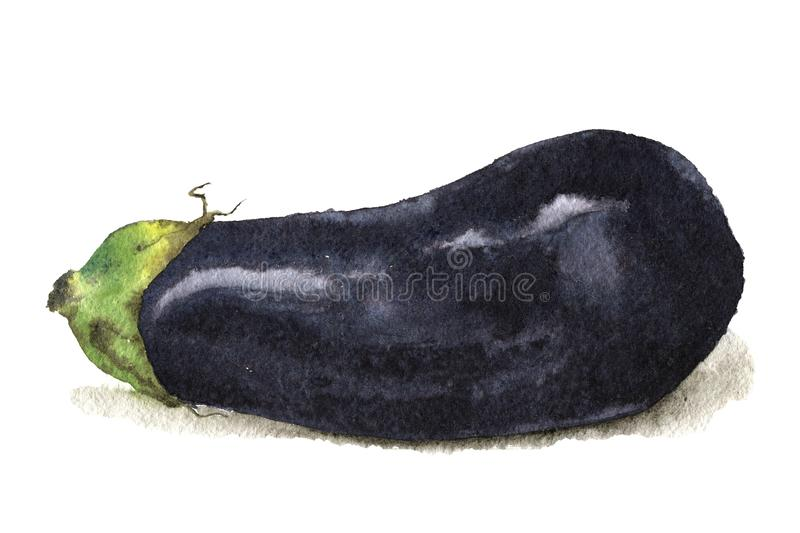 Watercolor illustration of a eggplant royalty free stock photography