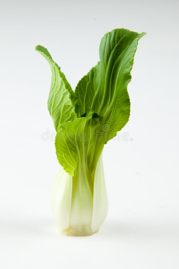 vegetable, Bok choy vegetable on white background, chinese cabbage stock photos