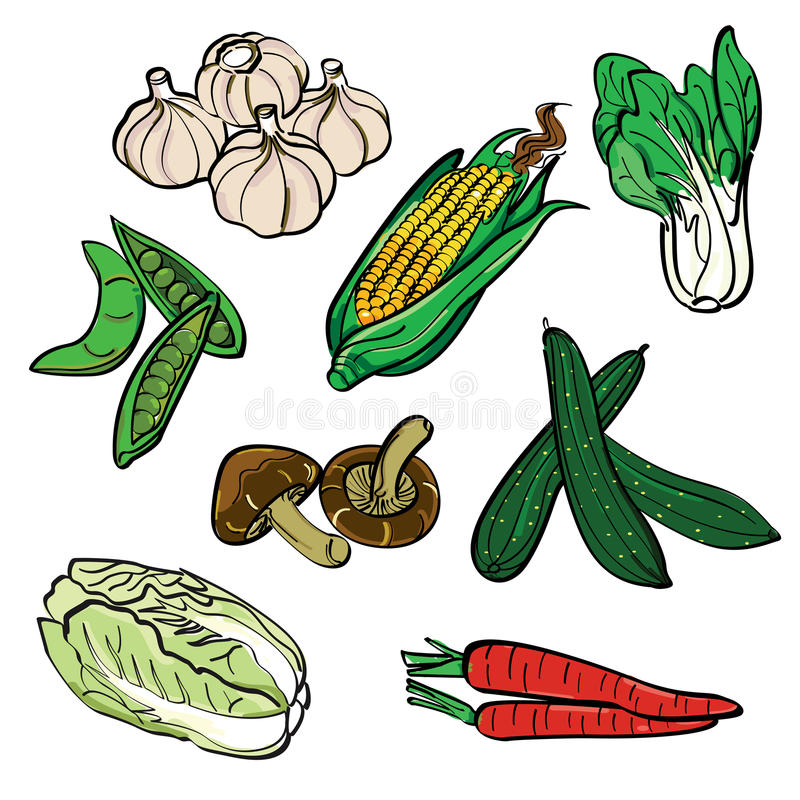 Vegetable Contains Vegetable color set stock illustration illustration of artistic a set of sketching of vegetables with filled color it contains hi res jpg pdf and illustrator 9 files workwithnaturefo