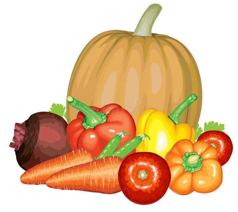 Vegetable composition. Vector illustrations of vegetables set pumpkin, peppers, peas, carrots, beet, tomatoes vector illustration
