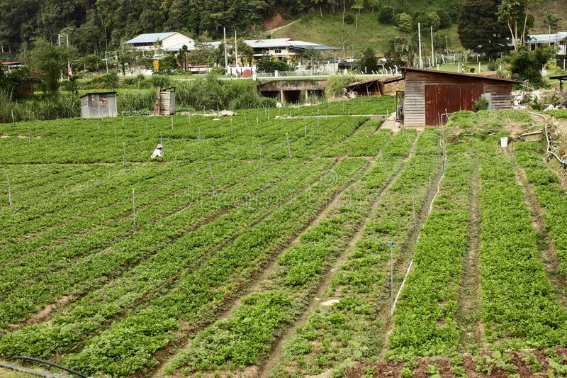 Download Vegetable farm stock photo. Image of farmland, garden - 26151860