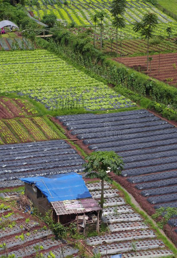 Vegetable farms in the highlands, Bandung, Indonesia. Vegetable plantations in the villages of Cikole, Lembang, Bandung, Indonesia from above royalty free stock photography