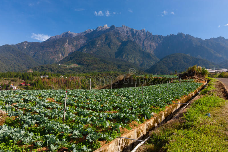 Vegetable field with Mount Kinabalu at the background royalty free stock photos