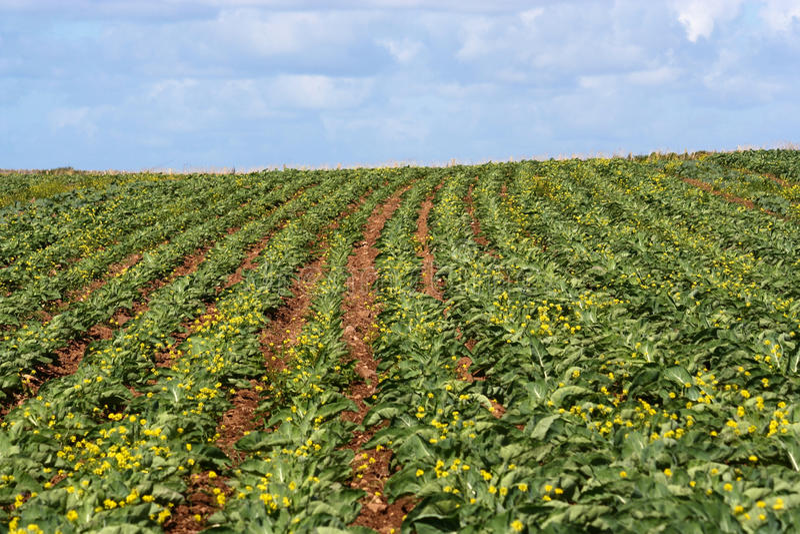 Download Vegetable filde stock photo. Image of garden, farming - 16239242