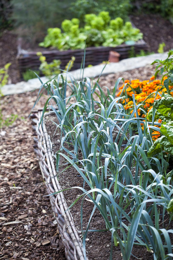 Vegetable and flower garden royalty free stock photography