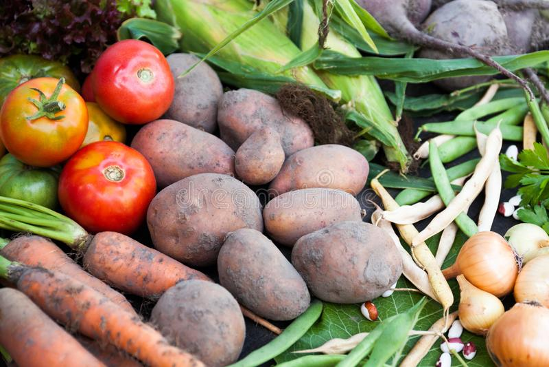 Vegetable food harvest, ripe farm agriculture background.  stock images