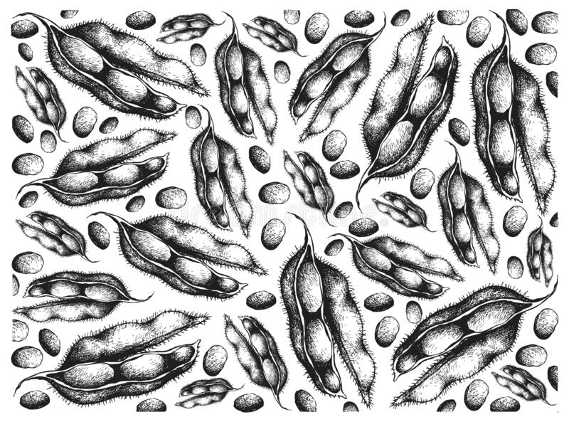Hand Drawn of Fresh Green Soybeans Background. Vegetable and Fruit, Illustration Wallpaper of Hand Drawn Sketch Fresh Green Soybean or Edamame Pods Isolated on vector illustration