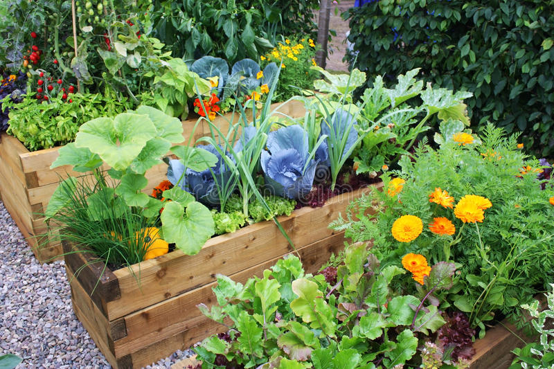 Download Vegetable garden stock image. Image of spring, vegetable - 13755877