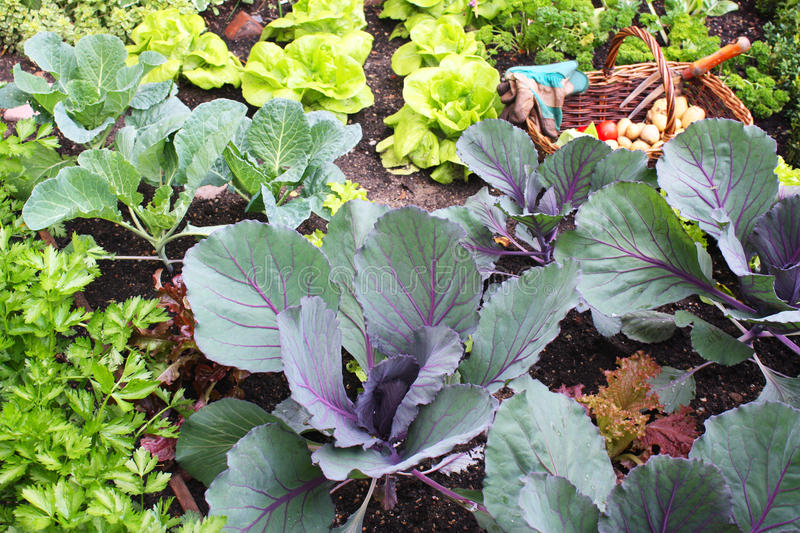 Download Vegetable garden stock photo. Image of spring, colorful - 14387534