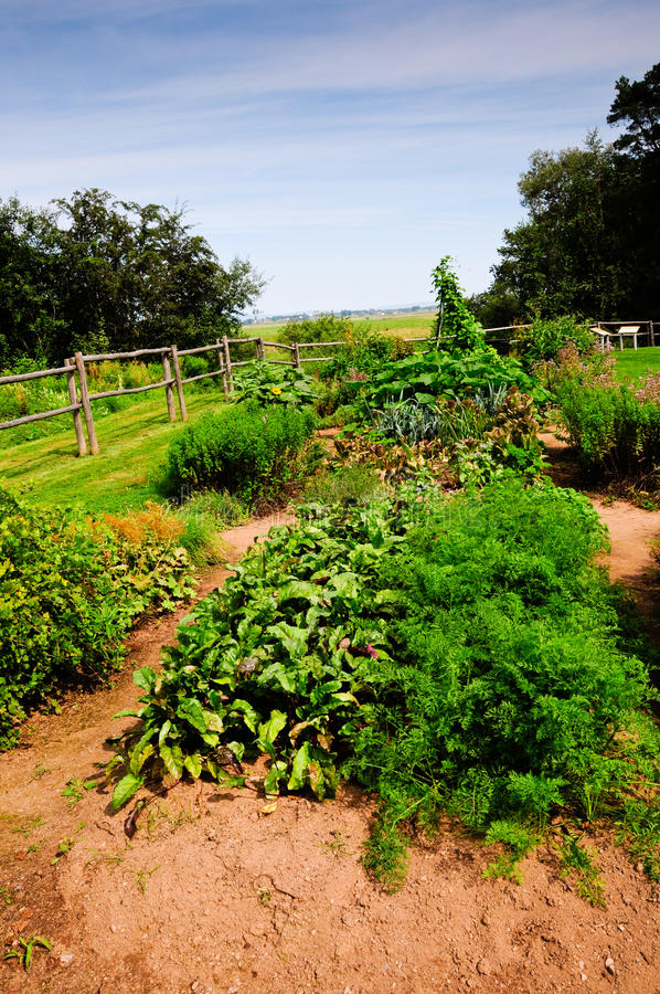 Download Vegetable Garden stock image. Image of wood, plants, plantings - 14859171